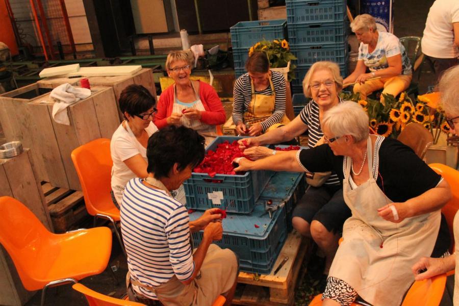 Vrijwilligers Hoogstraten in groenten & bloemen