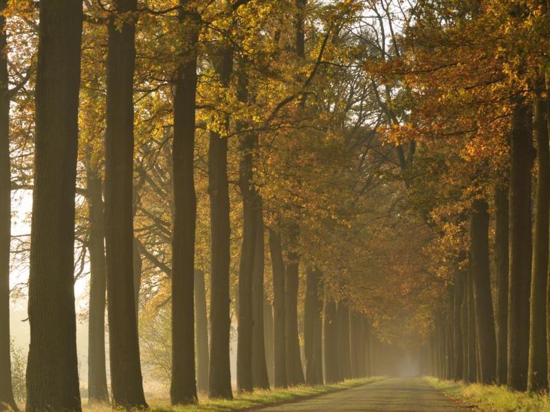 Dreef en lichte mist - door Wim Verschraegen