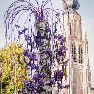 Hoogstraten in Groenten & Bloemen 2019 - Foto: E. Van Brabant